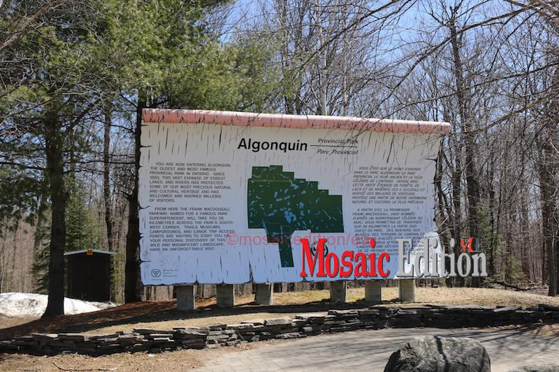 A place to visit – Canada – Algonquin Park - mosaicedition.ca-ea